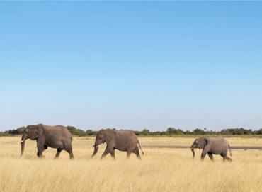 4x4 Safari durch Namibia und Botswana mit Barbara, Karin, Lars, Marcel und Paul (Juni2016)