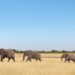 4×4 Safari durch Namibia und Botswana mit Barbara, Karin, Lars, Marcel und Paul (Juni 2016)