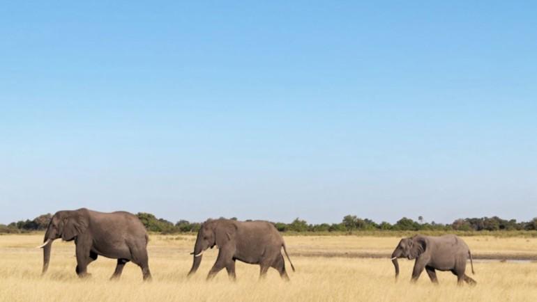 4x4 Safari durch Namibia und Botswana mit Barbara, Karin, Lars, Marcel und Paul (Juni 2016)